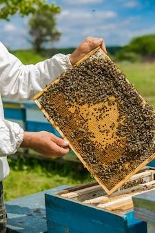 Rama z plastrami miodu z miodem w rękach pszczelarza na pasiece