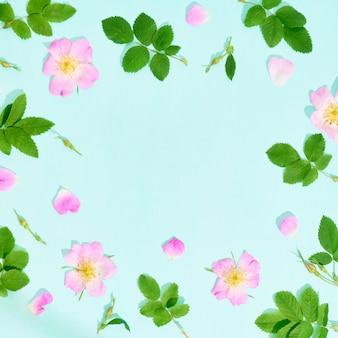 Rama z różowymi kwiatami dzikich róż na niebieskim tle. płaski świeckich, widok z góry.