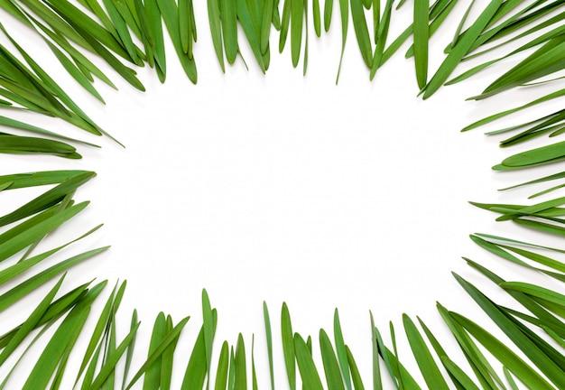 Rama z zielonych liści na białym tle