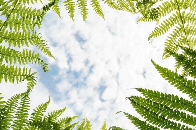 Rama z zielonych liści paproci na niebieskim tle pochmurnego nieba dla letnich projektów