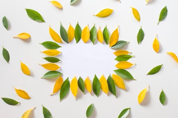 Rama z żółtymi i zielonymi liśćmi na białym tle. płaski lay, widok z góry.
