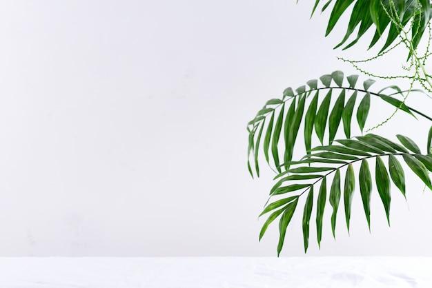 Ramka narożna z pozdrowieniami z zielonych gałązek tropikalnych palm egzotycznych powyżej tekstylnego białego tła.