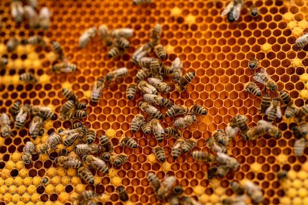 Ramka woskowa w produkcji miodu pszczelego