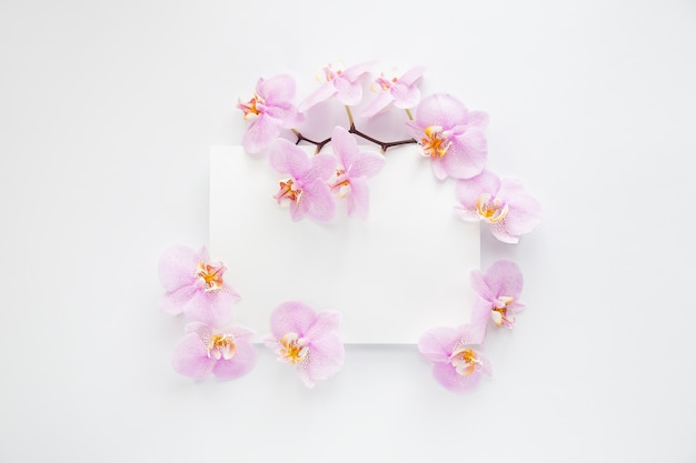 Ramka z fioletowymi kwiatami orchidei i obramowaniem na białym tle