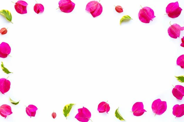 Ramka z pięknego czerwonego kwiatu bugenwilli na białej powierzchni