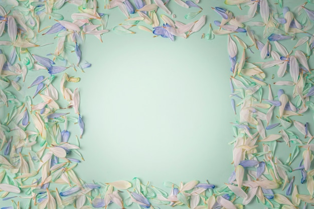 Ramka z płatkami kwiatów o różnych odcieniach, z niebieskimi i białymi płatkami na jasnozielonym tle.