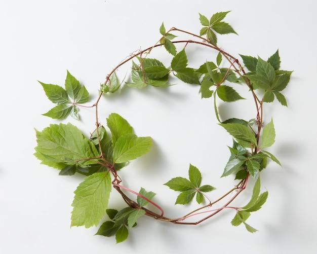Ramka zielony bluszcz roślin hedera helix na białym tle na białej powierzchni