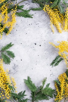 Ramki gałęzie mimozy na szarym tle