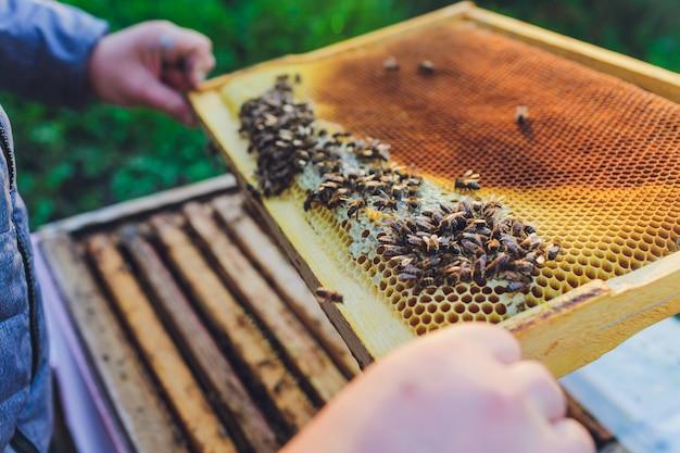 Ramki ula pszczół. pszczelarz zbierający miód.