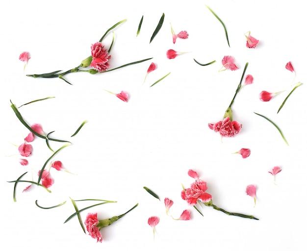 Ramy z kwiatów goździka na białym tle