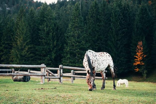 Ranczo w lesie. dwa pięknego konia pasają na zielonej trawie blisko drewnianego ogrodzenia