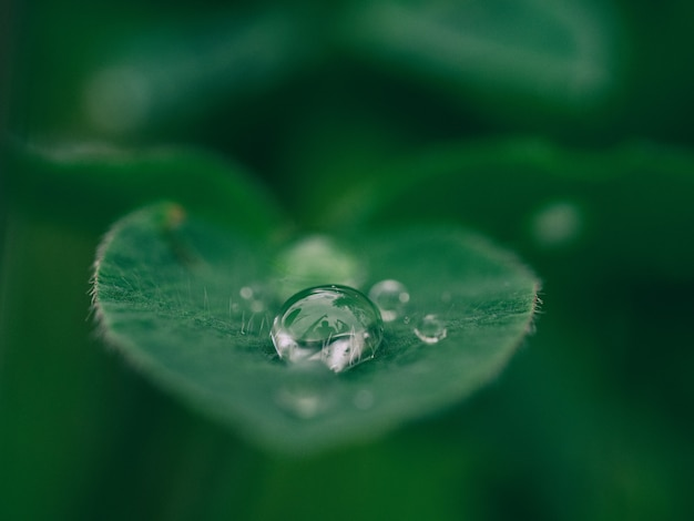 Ranek kropla rosa na zielonym liściu