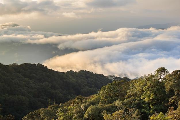 Ranku widok inthanon góra, chiang mai, tajlandia