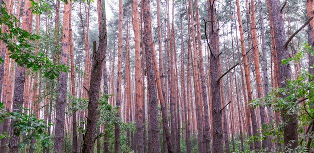 Rano las iglasty niewyraźne, tekstura natura abstact.