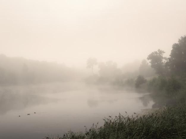 Rano lato krajobraz z mgłą nad jeziorem