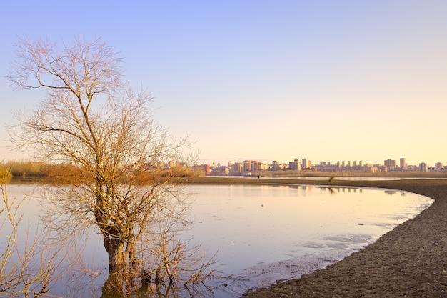 Rano nad rzeką ob w nowosybirsku nagie drzewo w wodzie w porannym świetle