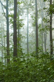 Rano w lesie. mgła rano w lesie
