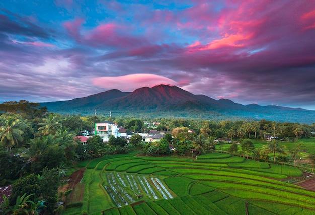 Rano wschód słońca na polach ryżowych w północnej bengkulu w indonezji w indonezji, kolor piękna i naturalne światło nieba