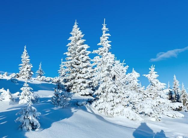 Rano zimowy krajobraz górski z jodłami na zboczu.
