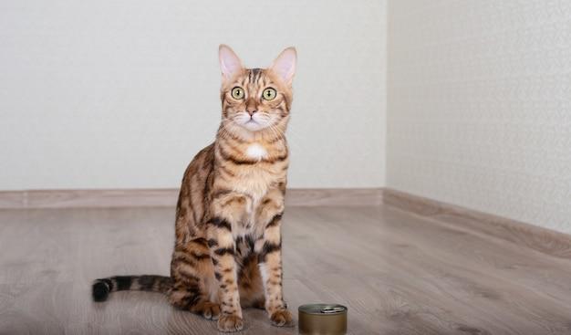 Rasowy kot bengalski siedzi w pobliżu karmy w puszkach z mokrą karmą dla kotów.