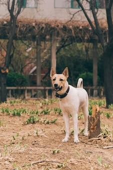 Rasowy pies na spacerze