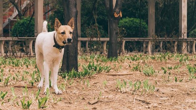 Rasowy pies w kołnierzu na spacerze