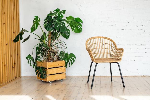 Rattanowe krzesło z wikliny na tle białej ceglanej ściany z dużą rośliną doniczkową. nowoczesny kamień
