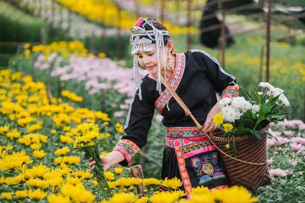 Rdzenni mieszkańcy północnej tajlandii i kolekcja chryzantem w ogrodzie