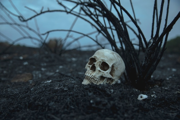 Realistyczna widok z boku czaszki z gałęziami odwracającymi wzrok