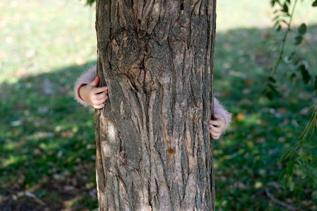 Ręce dzieci przytulają się do pnia dużego drzewa
