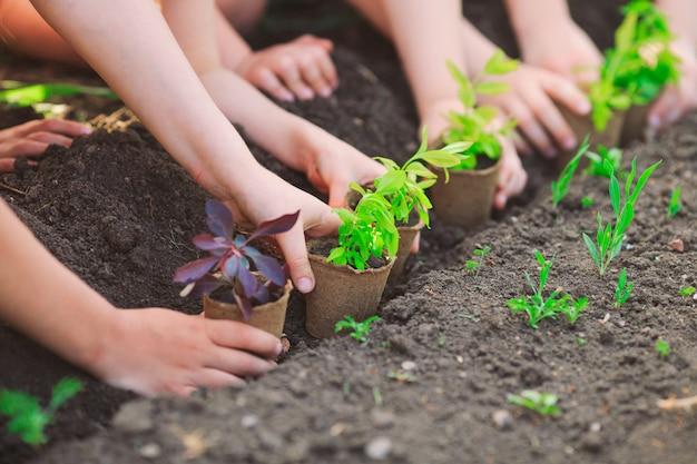 Ręce dzieci sadzące młode drzewa na czarnej ziemi razem jako światowa koncepcja ratowania