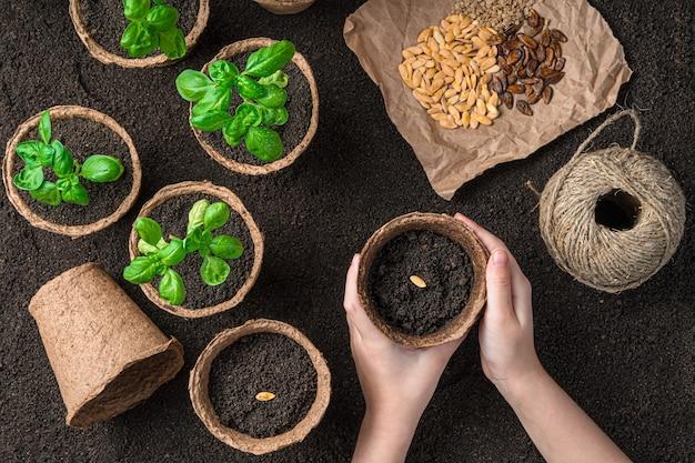 Ręce dziecka sadzą nasiona w doniczkach na tle sadzonek. widok z góry, poziomy. pojęcie uprawy.