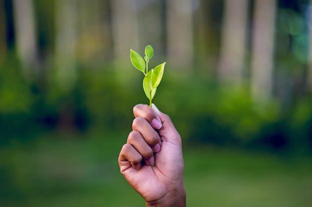 Ręce i zielone liście piękny zielony liściasty szczyt