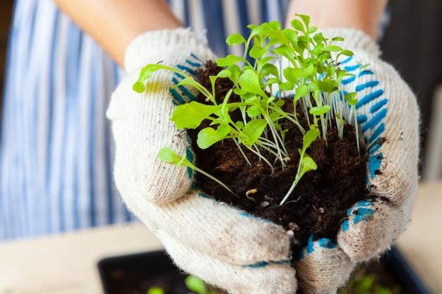Ręce kobiety sadzenia kiełki w doniczce z brudu lub gleby w pojemniku
