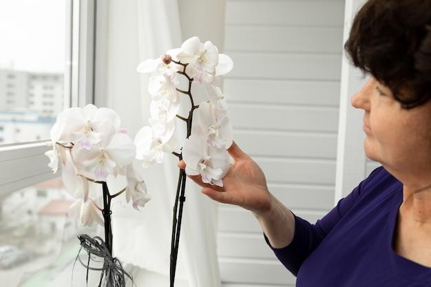 Ręce kobiety w wieku 55 lat trzymają białą orchideę. koncepcja pielęgnacji roślin. kwitną wiosną.