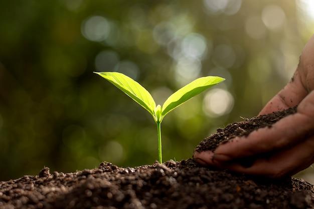 Ręce ludzi sadzą sadzonki.