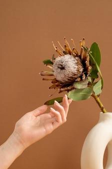 Ręce młodej kobiety dotykając zielonych liści dużych pięknych suszonych kwiatów w wazonie stojąc na brązowym