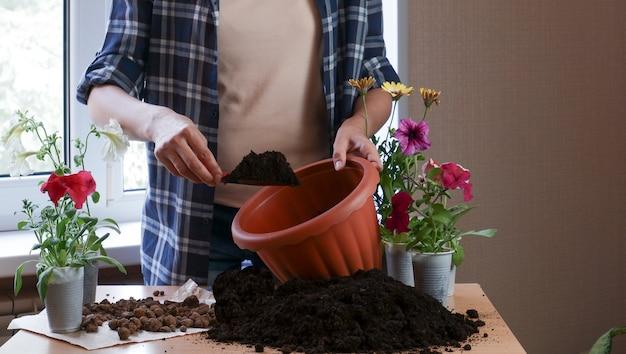 Ręce ogrodniczki w kraciastej koszuli sadzą kwiaty w doniczce z ziemią. kwiaciarstwo domowe