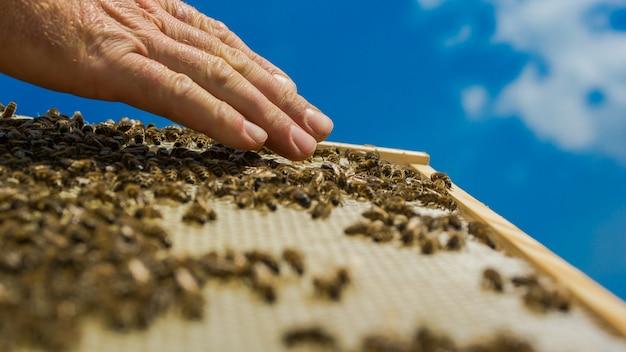 Ręce pszczelarza. pszczoły na plaster miodu. widok z góry pracujących pszczół