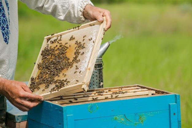 Ręce pszczelarza. pszczoły na plaster miodu.