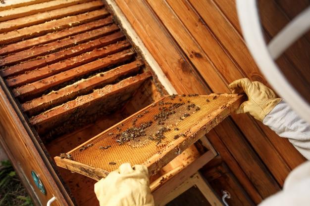 Ręce pszczelarza wyciągają z ula drewnianą ramę o strukturze plastra miodu
