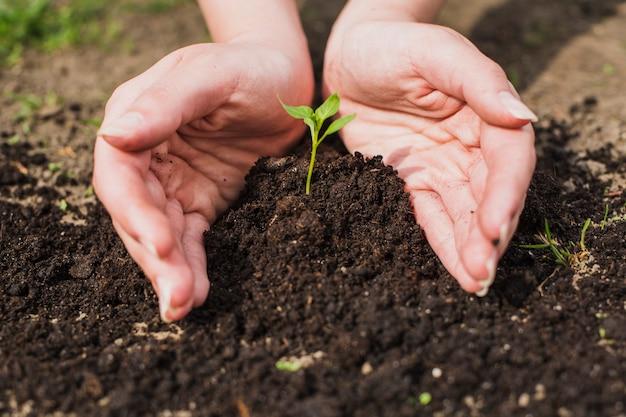 Ręce sadzenia