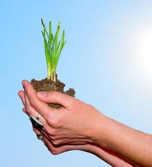 Ręce trzyma roślinę