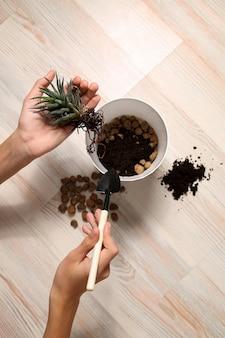 Ręce trzymaj roślinę i przygotuj się do sadzenia w doniczce.