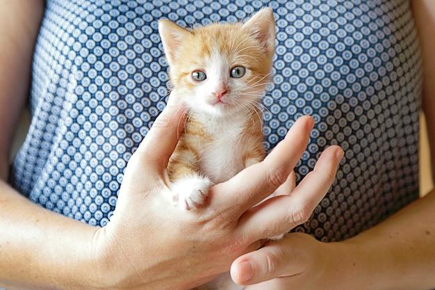 Ręce, trzymając ślicznego imbirowego kotka