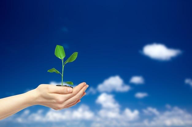 Ręce, trzymając zieloną roślinę