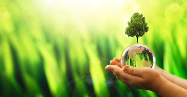 Ręce trzymające kryształową kulę ziemską i rosnące drzewo arbor day środowisko ratuje czystą planetę