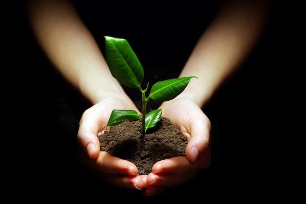 Ręce trzymające roślinę w glebie na czarno