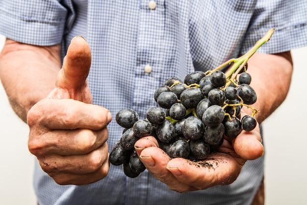 Ręce z kiści czarnych winogron i kciuki do góry