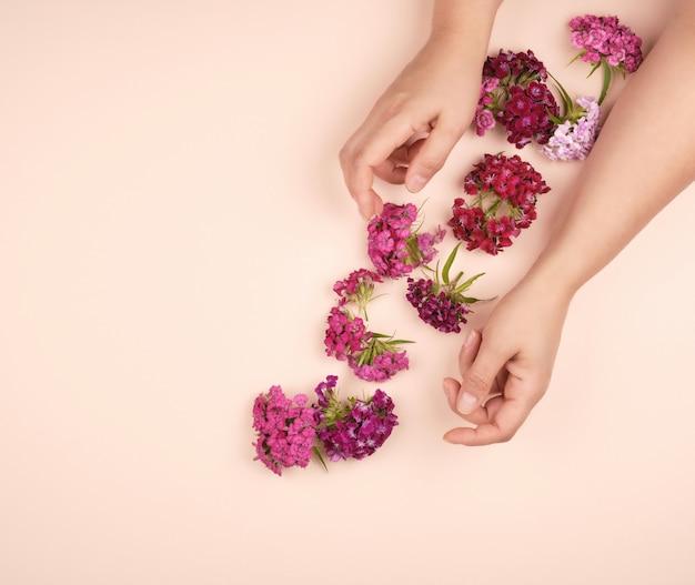 Ręce z lekką gładką skórą i pąkami kwitnącego goździka tureckiego